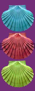 Muschelcollage