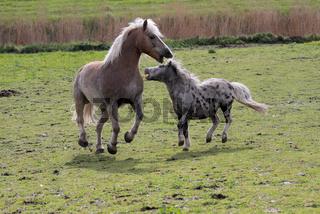 Bissiges Pony