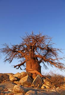 Kubu Island (lekhubu island) im Südwesten der Sowa Pan, Makgadikgadi pans, Botswana; famous Kubu Island, Botsuana