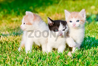 kittens on the grass