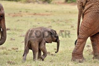 junges verspieltes Elefantenbaby