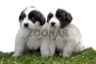 Cute dogs isolated