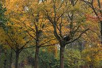 Herbstbäume im Regen