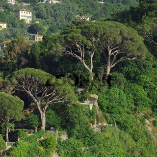 Camogli Pinien - Camogli Pine 02