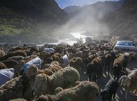 Schafherde blockiert Verkehr in Nordafghanistan