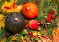 Kuerbis auf Herbstlaub