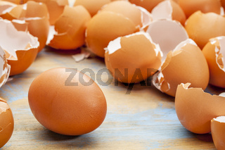chicken egg and eggshels
