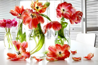 Colorful spring tulips in milk bottles on table