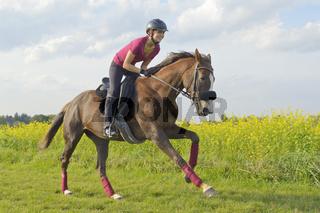 Galopp auf Vollblut / Galloping bloodstock mare