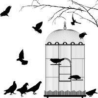 Birdcage and birds