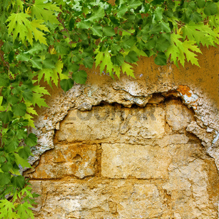 Bright green foliage on a background of ruined stone wall