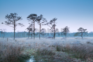 misty frosty morning on marsh
