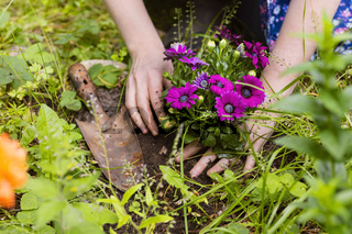 Blumen pflanzen, planting of flowers