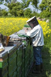 Imker bei der Arbeit mit seinem Bienenvolk