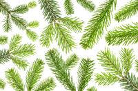 viele grüne Tannenzweige vor weißem Hintergrund