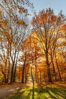 Leuchtende Herbstfarben im Park