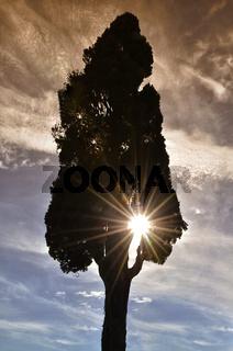 Zypresse -Toskana