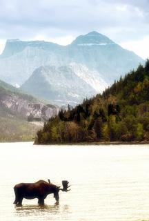 Trinkender Elch vor Berglandschaft
