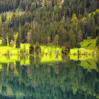Bäume und Wiese spiegeln sich im Wasser