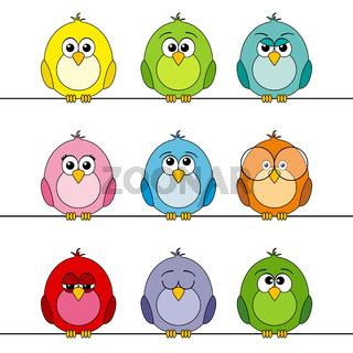 Lustige Vögel