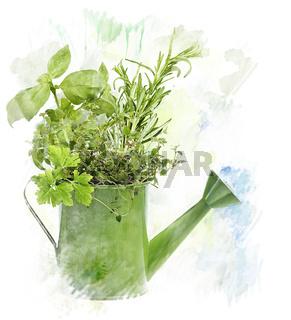 Watercolor Image Of  Herbs