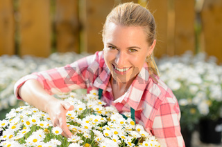 Smiling garden center woman potted daisy flowers