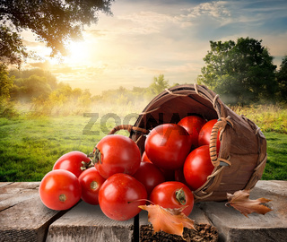 Tomatoes and landscape