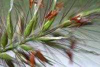Gras-Detail