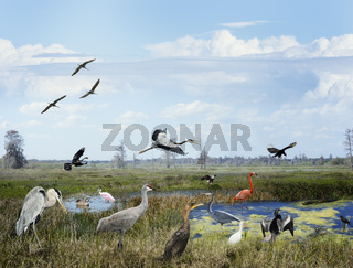 Florida Wetlands Collage