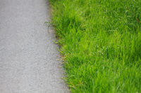 Asphalt and green gras
