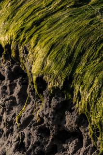 algen hoch