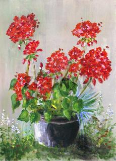 Red geranium in the rain