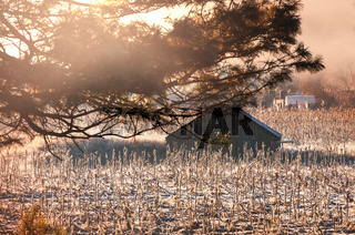 Autumn field