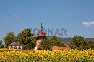 Geilweilerhof mit Sonnenblumen
