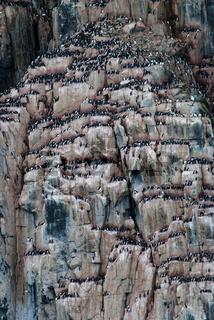 Alkefjellet, Spitzbergen, Norwegen