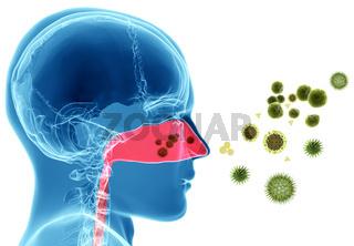 Pollen allergy / Hay fever