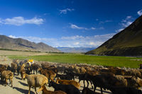 Schafherde vor Gebirgspanorama in Nordafghanistan
