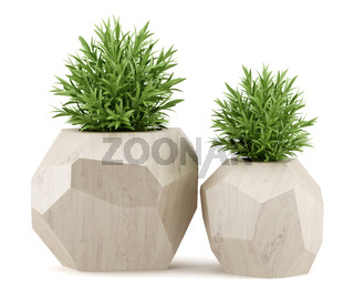 two houseplants in wooden pots isolated on white background