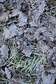 Reif auf am Boden liegendem Laub