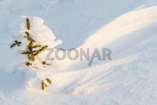 verschneite Fichte auf dem Berg Dundret, Gaellivare, Lappland