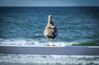 Möwe auf der Reling guckt raus auf das Meer