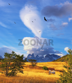 Magic cloud and flocks of Andean condors