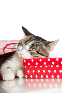 Kätzchen in Papiertüte