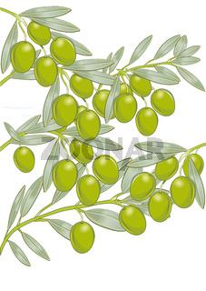 Oliven-Zweige.jpg