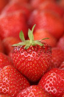 Erdbeeren Früchte mit Textfreiraum