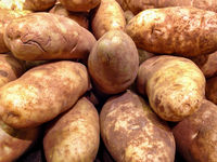 Large Russet Potatoes