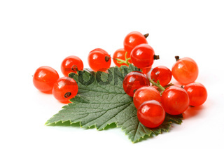 red currant and green leaf isolated on white background