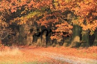 Herbst in Orange