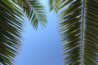 Palmenwedel umrahmen einen Platz für Werbetexte
