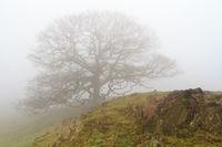 Baum im Nebel auf dem Kamm eines Hügels